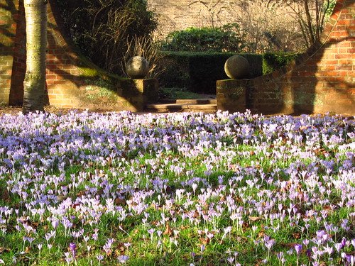 Crocus Walk, Cannizaro Park