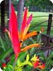 Feliz Feliz Quinta Flor ... (Joana Joaninha) Tags: minasgerais interior flor viagem quinta joanajoaninha hellennilce