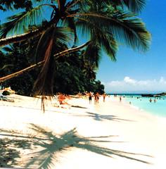 Dominican Republic - Samana-Island Cayo Levantado aka Bacardi Island (jjamv) Tags: dominicanrepublic caribbean santodomingo samana cayolevantado bacardiisland 100commentgroup mygearandme jjamv juliusvloothuis