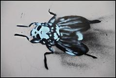 Flies#2 (zub4ik) Tags: streetart stencil moscow flies