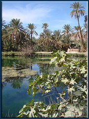the Agadir Lehna pond (mhobl) Tags: pond tata oasis morocco maroc marokko oasen agadirlehna