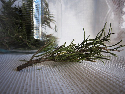 A twig of rosemary