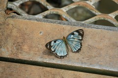 Open Spread (Alex E. Proimos) Tags: world park brazil argentina beauty animals butterfly wonder open flood time side visit falls national iguazu extraordinary iguassu iguacu proimos