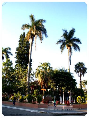 Alegria Parque Central