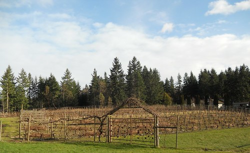 Whidbey Island Winery Vineyards