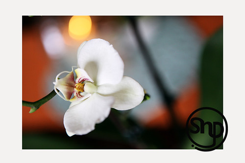 5 . orchid .