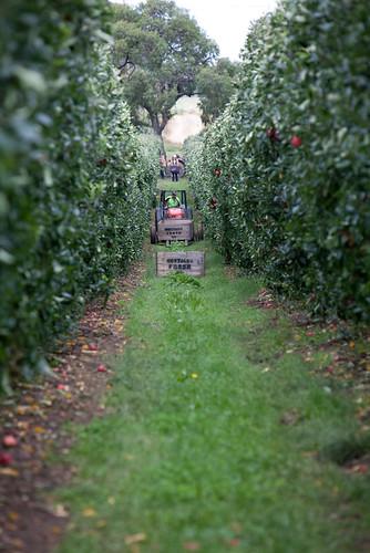 apple farm image