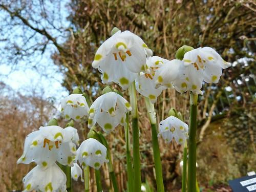 Spring blooms at Greenbank