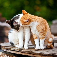 2 cats (Juan Antonio Cap) Tags: animal cat canon kat feline chat bokeh gato felino katze mace  gatto  kot gat koka kedi kissa kttur maka kucing pusa  mo moix    minino     pisic    canoneos5dmarkii