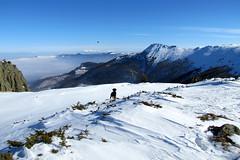 szárnyalás / on the wing (debreczeniemoke) Tags: winter dog mountain bird view hiking top kutya hegy transylvania transilvania height gutin erdély tél frakk túra madár kilátás magaslat csúcs kakastaréj canonpowershotsx20is creastacocoşului