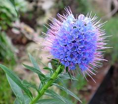 Glasgow Botanic Gardens T 01