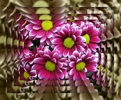 flower power (cloolis101) Tags: flower spring flowershow