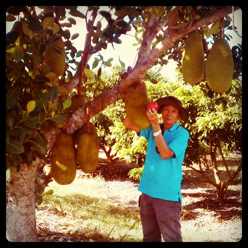 dad in his orchard with jackfruit and a teensy dragon fruit