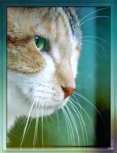 texture cat calico missstevienicks