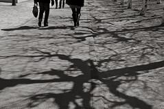 Brussels (bm^) Tags: brussels portrait people panorama white black blackwhite nikon zwartwit bruxelles portret brussel zwart wit plein mensen kunstberg bxl d90 mygearandme mygearandmepremium mygearandmebronze