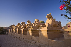 Sphinxes at Karnak Temple (Matt Champlin) Tags: life flowers history nature sphinx landscape temple ancient quiet peace egypt egyptian karnak luxor karnaktemple sphinxes egyptianlife gettyvacation2010 gettyvacation2011 sphinxeskarnaktemple
