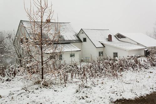 First Snow  -16.jpg