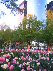 new york city spring (yesea) Tags: park nyc pink newyork nature architecture tulips thecity financialdistrict batterypark urbannature pinktulips 060510