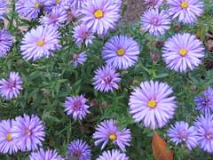 """Efterårsfarver • <a style=""""font-size:0.8em;"""" href=""""http://www.flickr.com/photos/53551333@N05/5525324601/"""" target=""""_blank"""">View on Flickr</a>"""