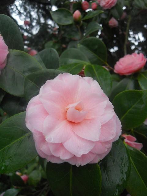 spring2011 037