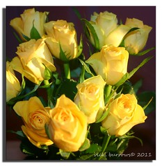 BIRTHDAY ROSES (vicki127.) Tags: flowers roses green leaves yellow stem canon300d gift digitalcameraclub youmademyday fantasticnature ilovemypics march2011 wonderfulworldofflowers 100commentgroup adobephotoshopcs5 ringofexcellence dblringexcellence vickiburrows vicki127