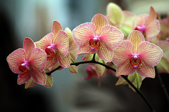 Orchid Splendor (GollyGforce) Tags: show travel original winter shadow red urban orange usa white plant abstract orchid flower color colour detail macro green texture nature floral beautiful face lines yellow closeup digital canon dark eos amusement petals eyes ancient flora colorful pattern afternoon dof angle natural bright artistic blossom michigan perspective lansing msu petal bloom practice curve delicate amateur horticultural symposium xsi 2011 flowersadminfave