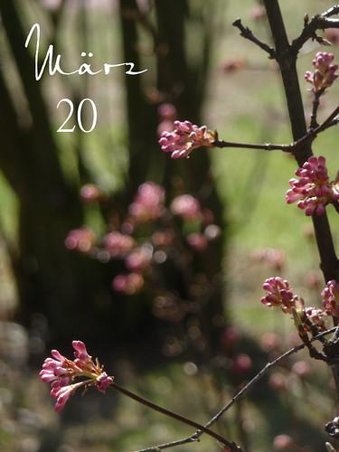 2011-03-20