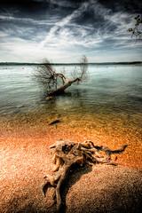 Two Trees (David Morton) Tags: lake canon table branson hdr tablerocklake 3xp photomatix 450d canon450d