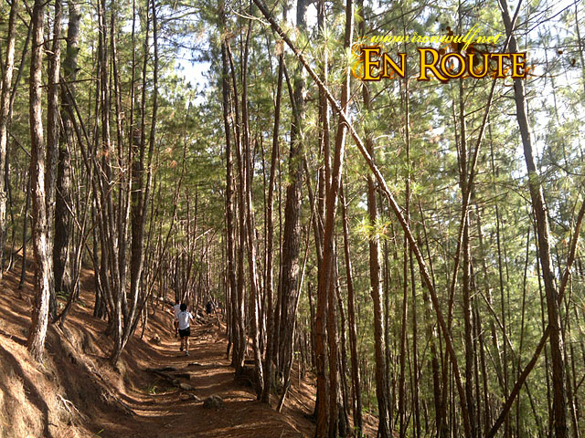 Love the pine tree trails