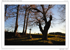 Tilleul - Espinasse, Puy de Dme (BerColly) Tags: sky france tree landscapes google flickr ciel lime sully paysage arbre parc auvergne puydedome tilleul livradoisforez bercolly nikkor24120f4vr