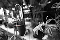 Hook Me Up (mankamen et ella) Tags: bw nikon hc110 lucky 100 f2 28 24mm nikkor milf fju nauto rsm shd photomic selfdevelop filmforever manilovefilm randomshotmalaysia filmjunkiesunite filemmalaya