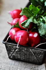 Spring Radishes (ashafsk) Tags: freshvegetables project365 projectfood365