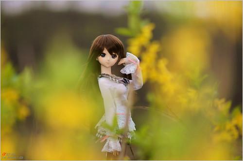 DSC05001 by leafsama