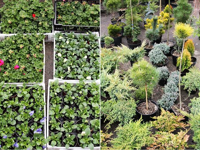 Turgaus augalai5