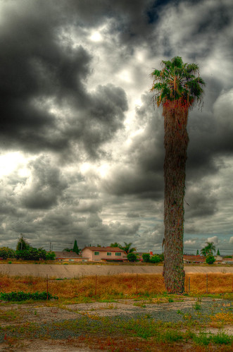 HDR - Clouds and Palm Tree