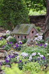 Fairy Garden (Blue-Eyed Kentucky) Tags: flowers gardens kentucky lexingtonkentucky mygarden whimsical fairyhouse violas fairygarden