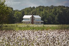 (SouthernHippie) Tags: plantation plantationhouse south southern sky slavery sad history historical home historic house country countryside old outside outdoors rural rurex cotton farmhouse farm field flickr pretty civilwar trees tree wow bright life alabama al americana american sunny landscape