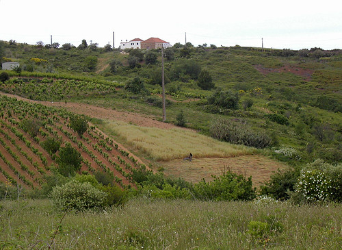 Rutas del vino por Extremadura