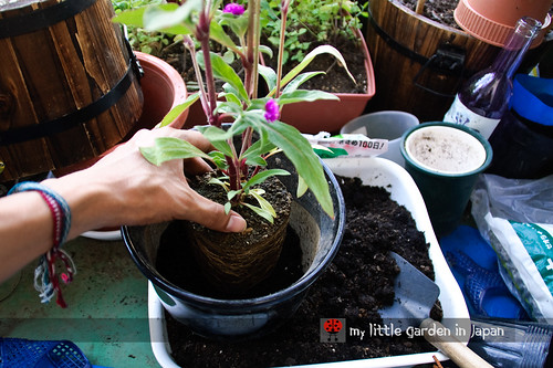 How-to-plant-in-a-container-3