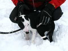 IMG_5043 (kmf221) Tags: park nyc winter snow dogs kids brooklyn prospectpark sleds 2011