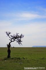 Mara, Kenya