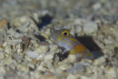 Goby at Siaes Tunnel