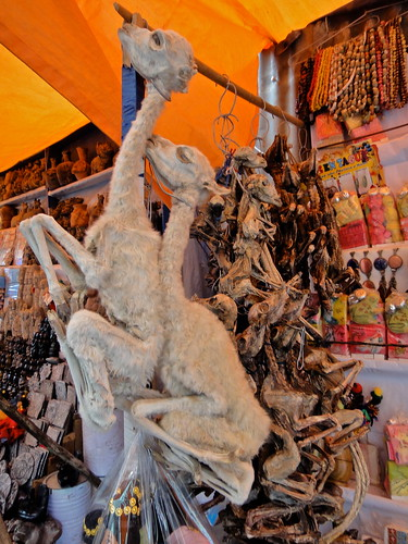 Llama Fetuses at the Witches Market in View of La Paz, Bolivia