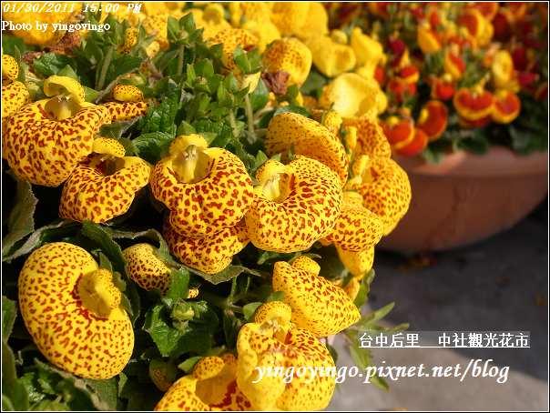 台中后里_中社光觀花市20110130_R0017642