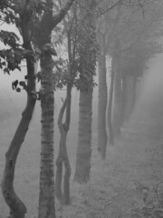 vanishing in fog... (Lorenzo T. (ricominciamo...)) Tags: trees winter nature fog alberi nebbia inverno rs friuli