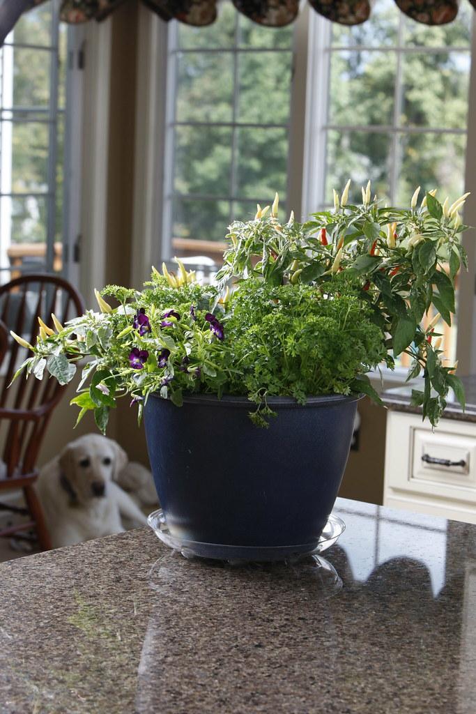 Attrayant Container Plant Indoors (Avant Garden Decor) Tags: Flowers Plants Garden  Herbs Outdoor Indoor