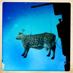 A cow cannot change his spots (Hipsta 365 Day 45) (graysong) Tags: signs cow nipple halo piercing leopard spotted teat