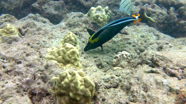 Snorkeling at hanauma bay hawaii everything you need to know for Plenty of fish oahu