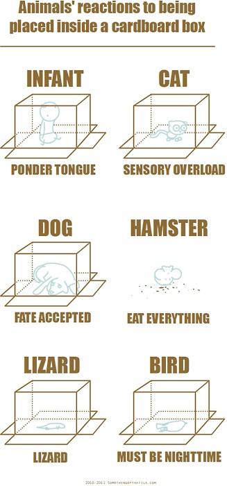 Animals reactions to being place inside a cardboard box