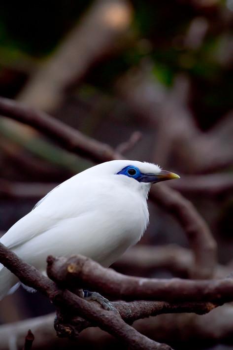 020611_zoo_bird05